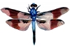dragonfly vintage image graphicsfairy006c.jpg